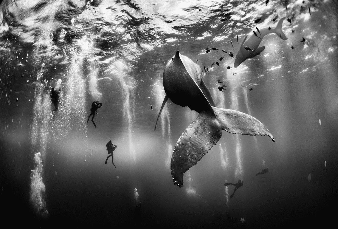 Bloop ballenas